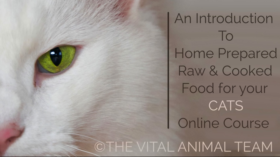 Dr Timo & Catherine: New Cat Nutrition Course
