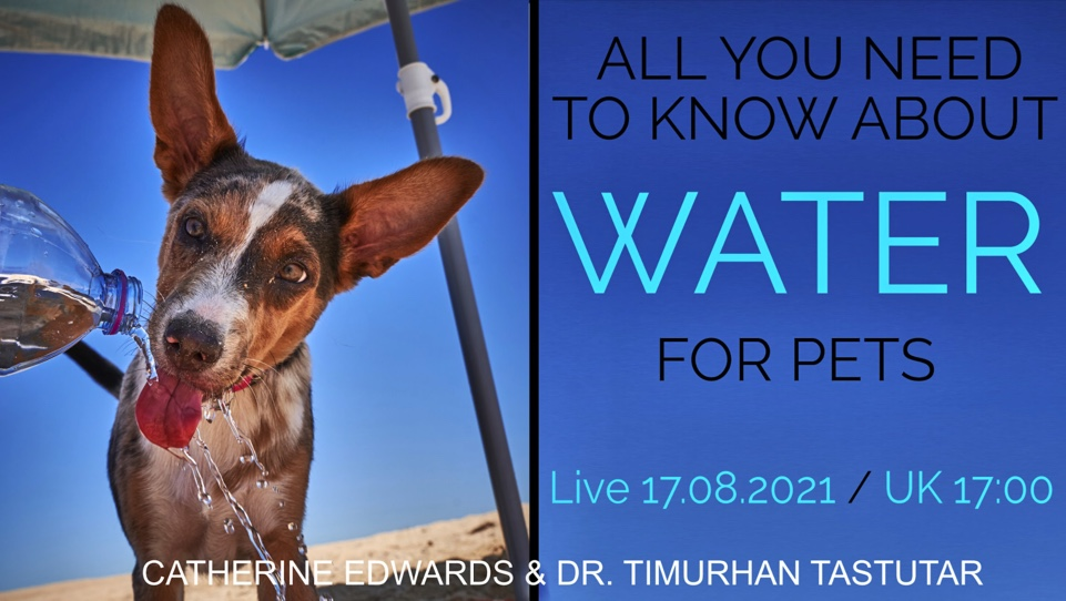 ALL YOU NEED TO KNOW ABOUT WATER FOR PETS: THE VIBRANT ANIMAL TEAM 17TH AUG 21 LIVE