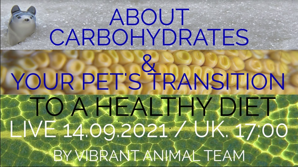 The Vibrant Animal Team: LIVE Tues 14th : Are Carbs Good For our Pets & How to Transition to a Healthy Diet