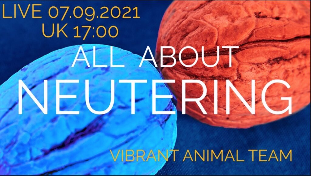 All About Neutering Your Pets – the most honest discussion on a life changing decision!